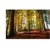Philippe Sainte-Laudy 'The Autumn Bench' Canvas Art