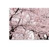 Ariane Moshayedi Cherry Blossom Bonanza Canvas Print