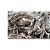 Kurt Shaffer Drift Wood Canvas Print