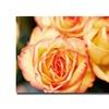 Ariane Moshayedi Roses Canvas Print