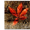 Miguel Paredes Red Leaves I Canvas Print 18 x 18