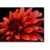 Red Dhalia by Kurt Shaffer- 14x19 Canvas Print