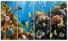 Coral Colony Panorama - Photography Canvas Art Print