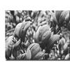 Ariane Moshayedi Closeup Magnolias Canvas Print