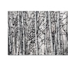 Roderick Stevens Winter Aspens Canvas Print