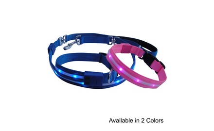 Night Bright LED Safety Dog Collar, Bright Blue, with 3 Flashing Modes, for Medium Sized Dogs 25-70lbs.