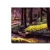 David Lloyd Glover Daffodil Park Canvas Print