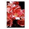 David Lloyd Glover Wild Roses Canvas Print