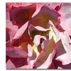 Amy Vangsgard Succulent Square II Canvas Print