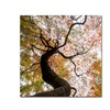 Kurt Shaffer 'Under a Japanese Maple 2' Canvas Art