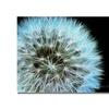 Kathie McCurdy Dandelion Seed Head Full Canvas Print