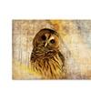 Owl by Lois Bryan - 16x24  Canvas Print 16 x 24