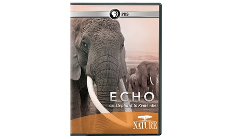 NATURE: Echo: An Elephant to Remember DVD d0b900f9-3cbc-4f81-889d-3f90fa5e532f