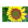Kathie McCurdy Sunflower Canvas Print 16 x 24