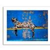 Banksy 'Bronx Zoo' Canvas Rolled Art