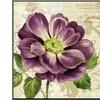 Study in Purple I by Pamela Gladding