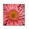 AIANA Pink Spider Canvas Print