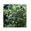 Kurt Shaffer Tiny Mushroom Forest Canvas Print