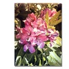 David Lloyd Glover Royal Rhododendrons Canvas Print
