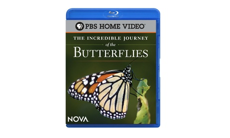NOVA: The Incredible Journey of the Butterflies Blu-ray fbd33945-fc19-49cf-9a9a-0d1809b712f3