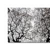 Kurt Shaffer Japanese Maple Spring Abstract Canvas Print
