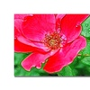 Kathie McCurdy Red Rose Canvas Print
