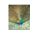Danhui Nai Teal Peacock on Gold Canvas Print