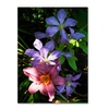 Kurt Shaffer Clematis and Lily Canvas Print