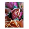 Kathy Yates Mauve and Peach Roses Canvas Print