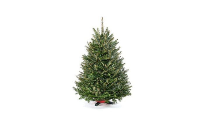 3 ft. Tabletop Premium-Grade Real Christmas Tree (Stand Included ...