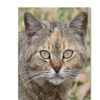 Patty Tuggle Pretty Kitty Canvas Print