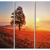 Tree and Sun - Landscape Photography Canvas Art Print