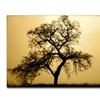 Coleen Proppe Pacific Oak Canvas Print