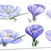 Hand-drawn Crocuses Floral Art Painting Metal Wall Art 28x12