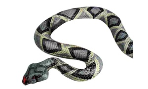 Dalen NE-SR Inflatable Ornament Snake, 6'