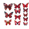Butterfly Wall Decals For Kids Room