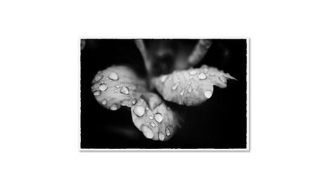 PIPA Fine Art 'Raindrops on Wild Rose' Canvas Art dd31169f-b63d-48ea-a104-6714de819205