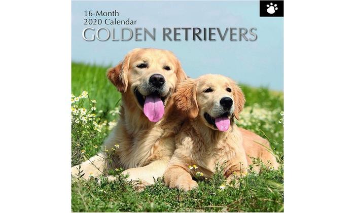 2020 Wall Calendar 12 16 Month Dog