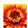 Kurt Shaffer 'Floral Mass Coronal Ejection' Canvas Art