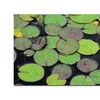 Kathie McCurdy Frog in the Lily Pond Canvas Print