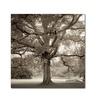 Alan Blaustein 'Hampton Maple I' Canvas Art