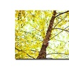 Ariane Moshayedi 'Prickly Trunk' Canvas Art