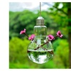 Transparent Light Bulb Type Hanging Glass Vase