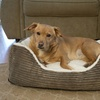 Iconic Pet - Luxury Lounge Pet Bed - Dark Moss - XLarge