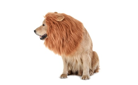 Dog's Lion Mane Costume Lion Wig Festival Party Fancy Hair Dog Clothes 23214c7b-e47f-43ea-9f57-3d435c9dba1e